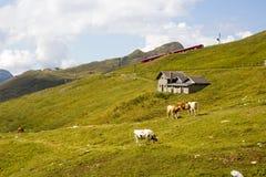 Las montañas suizas en el área del Eiger Fotos de archivo