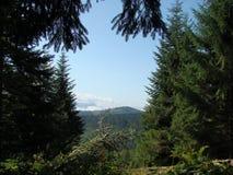 Las montañas y los bosques del pino fotografía de archivo libre de regalías