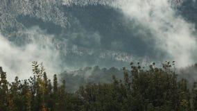 Las monta?as con el ?rbol de pino Forest With Misty Fog Misty Fog Blowing Over Mountains con el ?rbol de pino Forest At Dusk almacen de metraje de vídeo