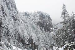 las mrożone fotografia stock