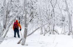 las mrożone zdjęcia royalty free