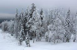 las mrożone Zdjęcie Stock