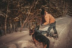 Las muchachas juegan en la nieve, el perro miran al fotógrafo en perplejidad fotografía de archivo