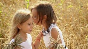 Las muchachas preciosas en los vestidos blancos con los oídos del trigo en manos sonríen y hablan Naturaleza de Rusia Campos ilim almacen de metraje de vídeo