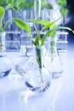 Las muestras de estupendo crecen las plantas Fotografía de archivo libre de regalías