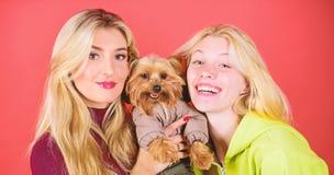 Las mujeres abrazan el terrier de Yorkshire El terrier de Yorkshire es el perro cari?oso muy cari?oso que anhela la atenci?n Perr imagen de archivo libre de regalías