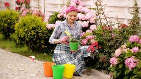 Las mujeres cuidan las flores en potes Flores en potes del color Flores del empuje de la mujer Resorte hermoso Mujeres en jardín  almacen de metraje de vídeo