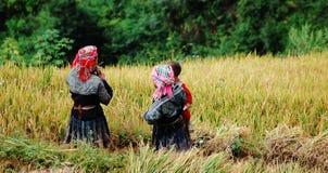 Las mujeres de Hmong que trabajan en el arroz colocan en la ciudad de Sapa, Vietnam septentrional Imágenes de archivo libres de regalías