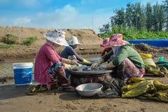 Las mujeres están filtrando los huevos de la almeja Imagen de archivo