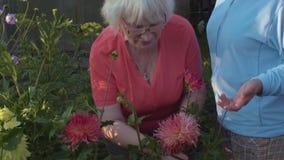 Las mujeres mayores que huelen la dalia rosada florecen en jardín almacen de video