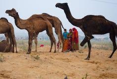 Las mujeres rurales de Rajasthani que recogen el camello exoneran el vientre para utilizar éstos como combustible en casa Imágenes de archivo libres de regalías