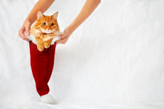Las mujeres sostienen un sombrero rojo de la Navidad con el gato del jengibre en él Fotos de archivo