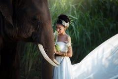 Las mujeres y el evento de los elefantes forman el retrato del concepto en el tradit Fotos de archivo libres de regalías