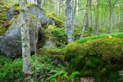 Las na granitów jarach i skałach Zdjęcia Stock