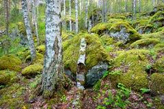 Las na granitów jarach i skałach Fotografia Royalty Free