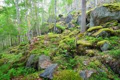 Las na granitów jarach i skałach Zdjęcie Stock