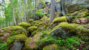 Las na granitów jarach i skałach Zdjęcia Royalty Free