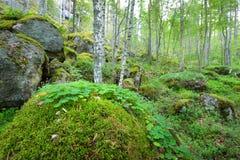 Las na granitów jarach i skałach Obrazy Royalty Free