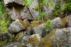Las na granitów jarach i skałach Zdjęcie Royalty Free