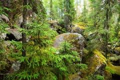 Las na granitowych skałach Zdjęcie Royalty Free