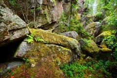 Las na granitowych skałach Fotografia Royalty Free