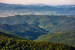 Las na halnym skłonie przeglądać od wierzchołka Obraz Stock