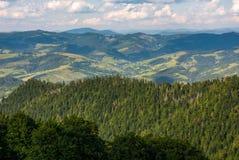 Las na halnym skłonie przeglądać od wierzchołka Obrazy Royalty Free