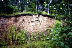 Las na krawędzi falezy Zdjęcia Stock
