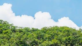 Las na niebieskim niebie Las z chmurnym , las na niebieskim niebie Obraz Stock