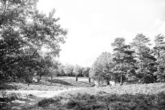 Las na pogodnym niebie Drzewa w zielonym drewnie w wiośnie lub lecie Natura pięknego widoku krajobraz Ekologia i środowisko obraz stock