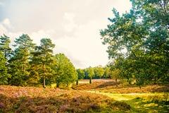 Las na pogodnym niebie Drzewa w zielonym drewnie w wiośnie lub lecie Natura pięknego widoku krajobraz Ekologia i środowisko zdjęcia stock