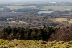 Las na wzgórzu Obraz Royalty Free
