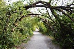 las nad ścieżek drzewami Obraz Royalty Free