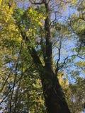 Las, natura Drzewo Zdjęcie Stock