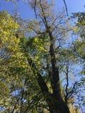 Las, natura Drzewo Fotografia Stock