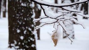 Las nevadas fuertes en las ramas del bosque cubiertas con nieve se sacuden en el viento almacen de metraje de vídeo