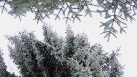 Las nevadas fuertes en las ramas del bosque cubiertas con nieve se sacuden en el viento metrajes