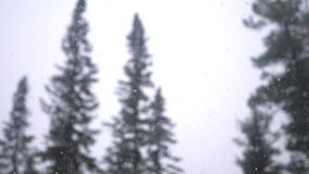 Las nevadas pesadas en el invierno fabuloso del bosque del invierno del pino empañaron el bosque y el fondo del cielo 3840x2160 almacen de metraje de vídeo