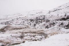 Las nevadas pesadas en el piso arman, el Sur de Gales, Reino Unido foto de archivo libre de regalías