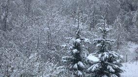 Las nevadas tranquilamente y caen reservado en ramas de árboles Invierno almacen de metraje de vídeo
