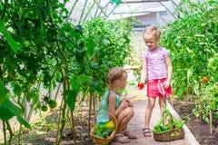 Las niñas lindas recogen los pepinos de la cosecha en Fotos de archivo
