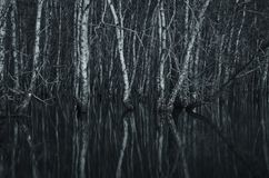 las nie żyje obrazy royalty free