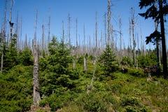 las nie żyje Fotografia Stock