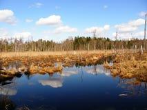 las nie żyje Fotografia Royalty Free