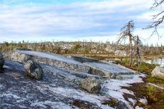 las nie żyje Obraz Royalty Free