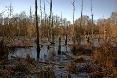 las nie żyje Zdjęcie Royalty Free