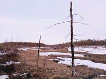 las nie żyje Obraz Stock