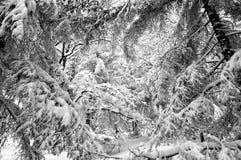 las śniegu Zdjęcia Stock