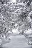 las śniegu Zdjęcie Stock