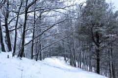 las śniegu Obraz Stock
